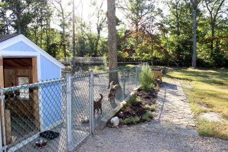 dog house walk