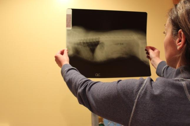 Rosie x-ray 002