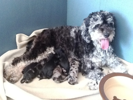 Rosie with a beautiful litter