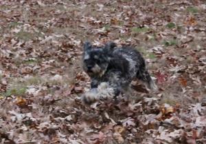 Running Rosie 3