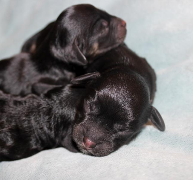 three black beauties (1)