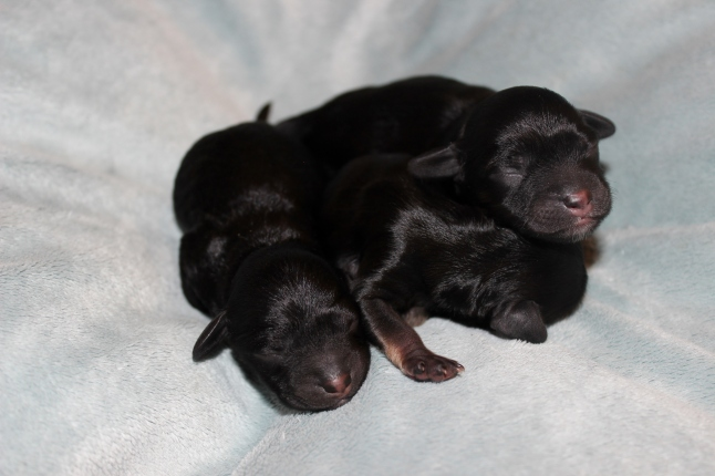 three black beauties (4)