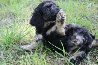 """the """"play with me"""" puppy paw-at-you move. Love it!"""