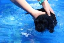 cocoa swimming (13)