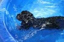 cocoa swimming (57)