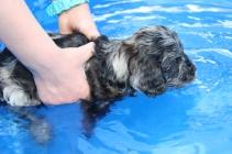 Filbert swimming (12)