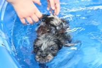 Filbert swimming (18)