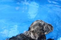 Filbert swimming (23)