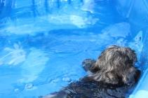 Filbert swimming (24)