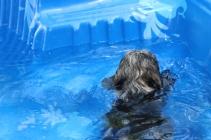 Filbert swimming (25)