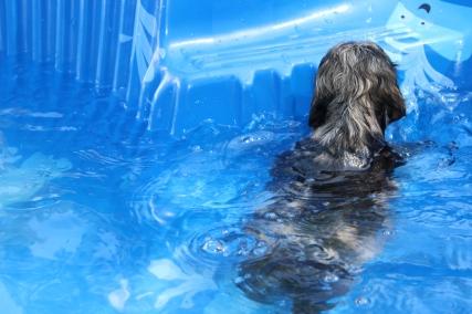 Filbert swimming (26)