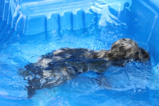 Filbert swimming (27)