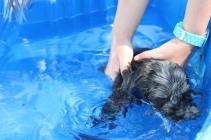 Filbert swimming (33)