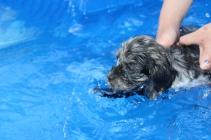 Filbert swimming (35)