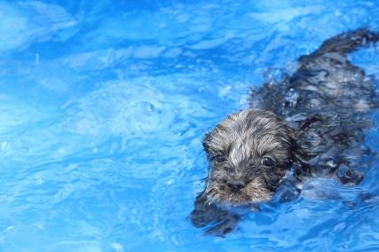 Filbert swimming (37)