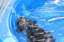 Filbert swimming (42)