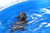 Filbert swimming (44)