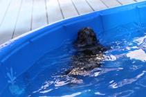 Filbert swimming (45)