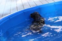 Filbert swimming (46)