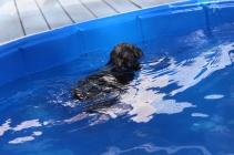 Filbert swimming (48)