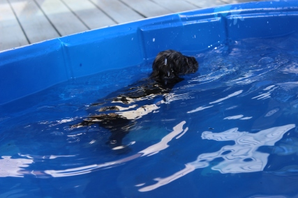 Filbert swimming (49)
