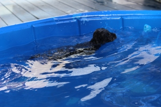 Filbert swimming (51)