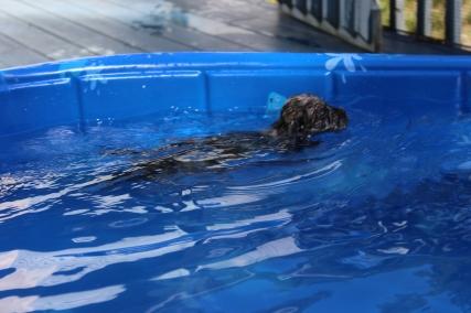 Filbert swimming (52)