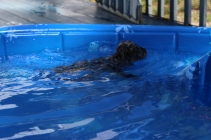 Filbert swimming (53)