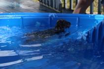 Filbert swimming (54)