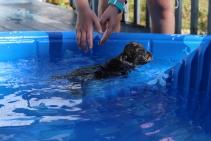 Filbert swimming (55)