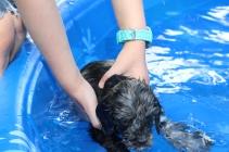 Filbert swimming (58)