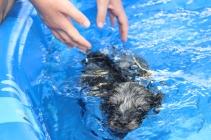 Filbert swimming (64)