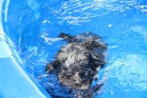 Filbert swimming (65)