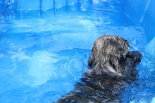 Filbert swimming (67)