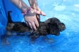 Kola swimming (16)