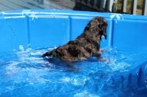 Kola swimming (4)