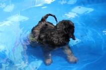 Kola swimming (7)