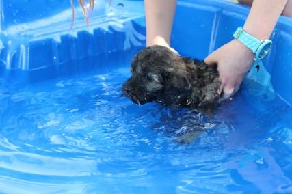 Marzipan swimming (1)
