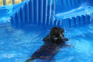 Marzipan swimming (11)