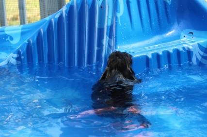 Marzipan swimming (12)