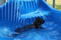 Marzipan swimming (13)