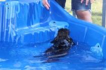 Marzipan swimming (14)