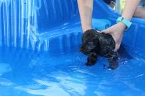 Marzipan swimming (16)