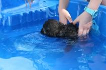 Marzipan swimming (2)