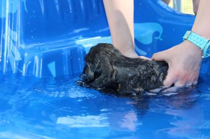 Marzipan swimming (23)