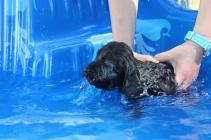 Marzipan swimming (25)