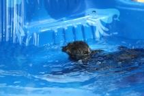 Marzipan swimming (26)
