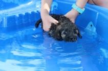 Marzipan swimming (29)