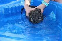 Marzipan swimming (30)