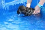 Marzipan swimming (33)